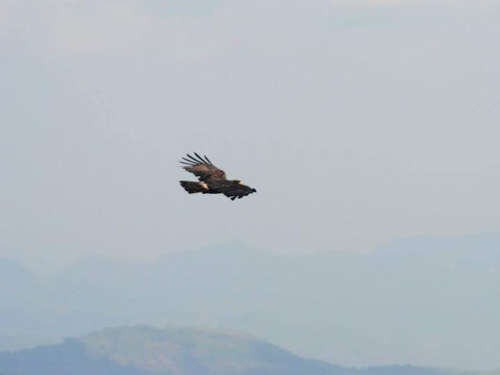 Eaglet, Gudalar