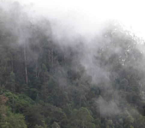 Berijam Forest, Kodaikanal