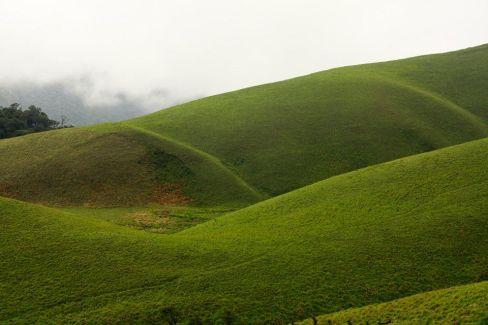 Grass Hills, Valparai