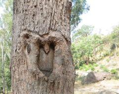 Monkey Tree, Masinagudi