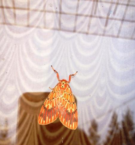 Moth, Kerala