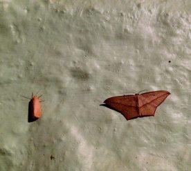 Moths, Kerala