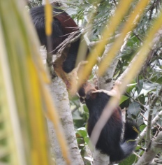 Malabar Giant Squirrels, Kerala