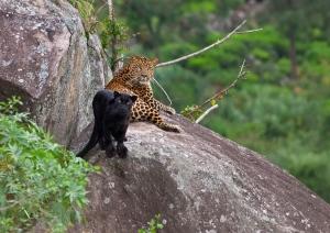 www.conservationindia.org