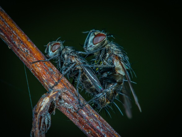 insect-3373039_1920