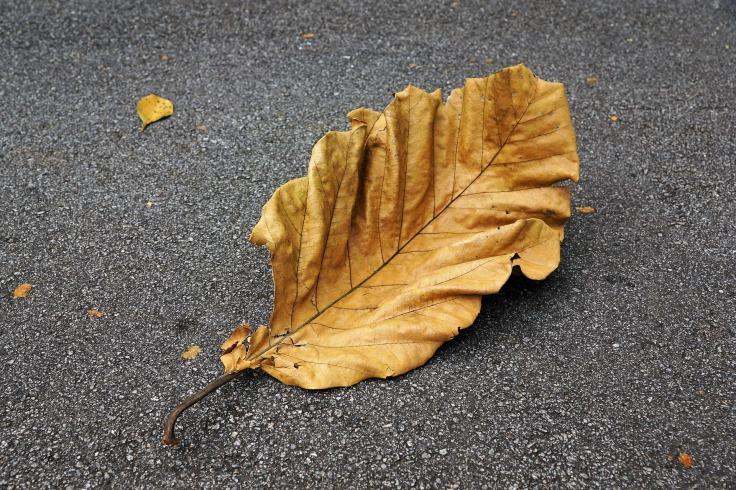 autumn-3264131_1920