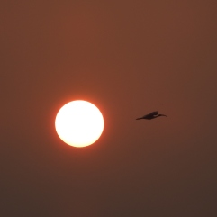 Sunrise in Chennai